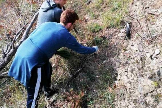 Očuvanje prirode u Jablanici, akcija sadnje 500 sadnica crnog bora i 125 sadnica smrče